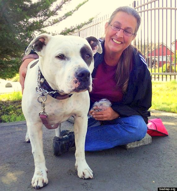 Family Chooses Homelessness Over Abandoning Pit Bull