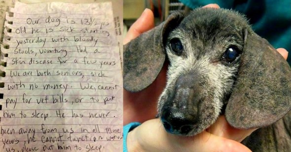 3.13.14 - Senior Dog Left with Note to Be Returned1