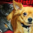 Abandoned Chihuahua Saves Kitten from Freezing to Death