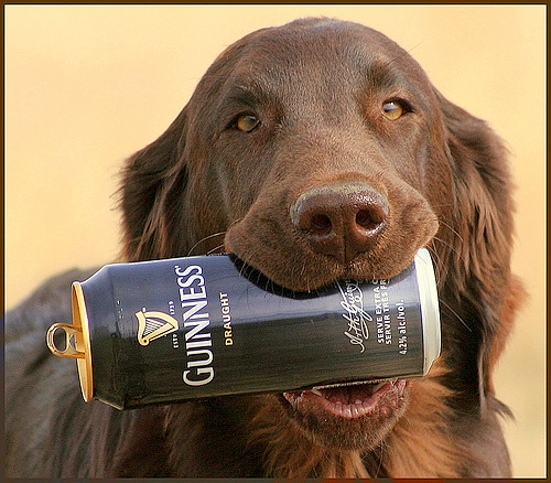 Does Guinness Beer Kill Heartworms Life With Dogs
