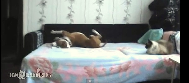 Dog Parties on Forbidden Bed