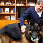 Colombian VP Declines Ambassadorship for His Dog's Sake