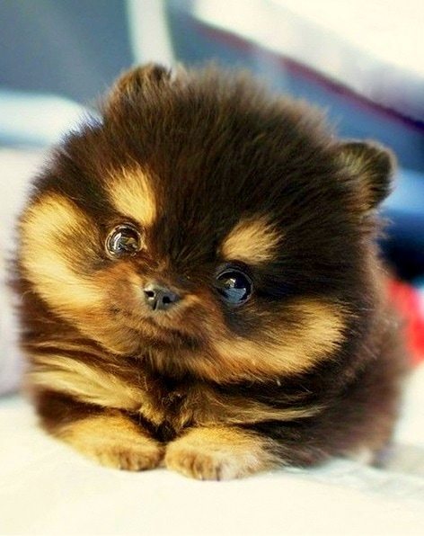 National Puppy Days Cutest Puppies Life With Dogs