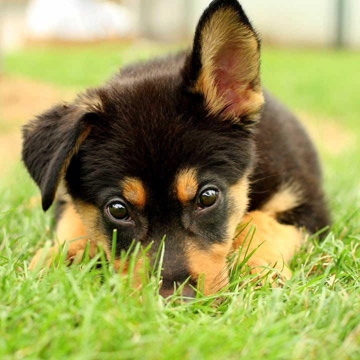 Pictures of puppies to get you through the day voltagebd Image collections