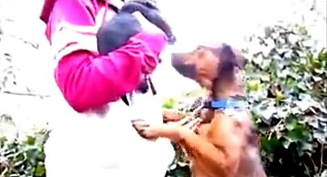 Stray Mama Leads Woman into Woods to Rescue Her Puppies