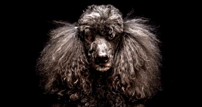 Stunning Photos Help Fight Black Dog Syndrome