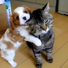 Dogs & Cats Meeting for the First Time
