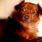 Reward Offered for Dog Stolen with Car