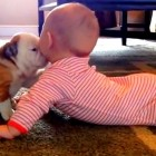 English Bulldog Puppy Shares Good Morning Smooches With Baby
