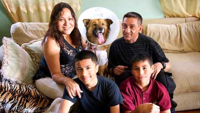 Dog Who Saved Kids from Gunman Returns Home