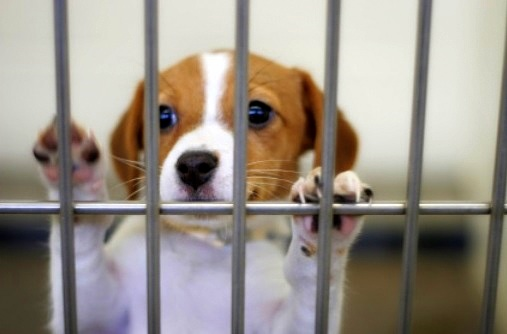 Chicago Bans Puppy Mill Pet Stores