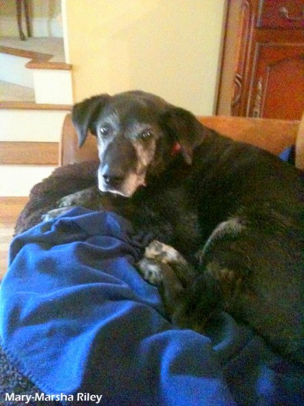 3.5.14 - Happy Ending for Abused Senior Dog2