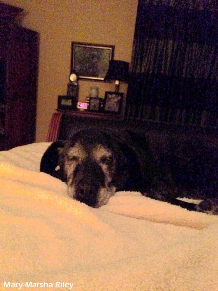 3.5.14 - Happy Ending for Abused Senior Dog3