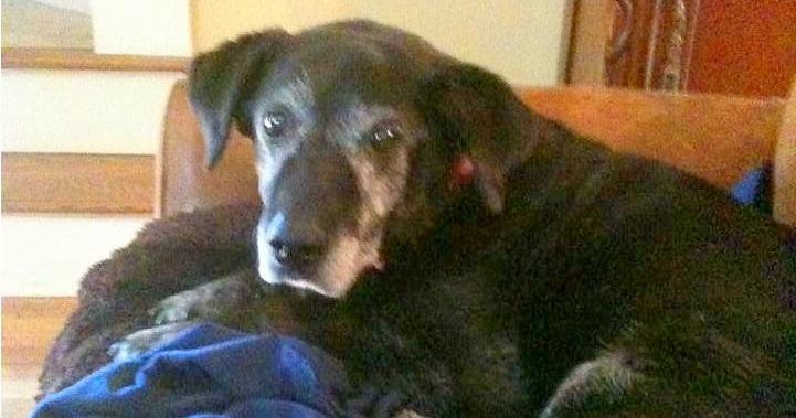 Unwanted Senior Black Mutt Gets His Happy Ending