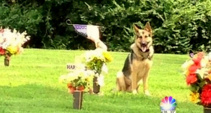 Abducted Cemetery Dog Reunited with Family