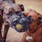 Photographer Finds Passion after Expanding Into Pet Photography