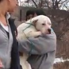 American Strays dog rescued from park 5
