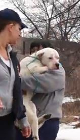Rescuers Work to Save Dogs After Numerous Bodies Found in Detroit Park