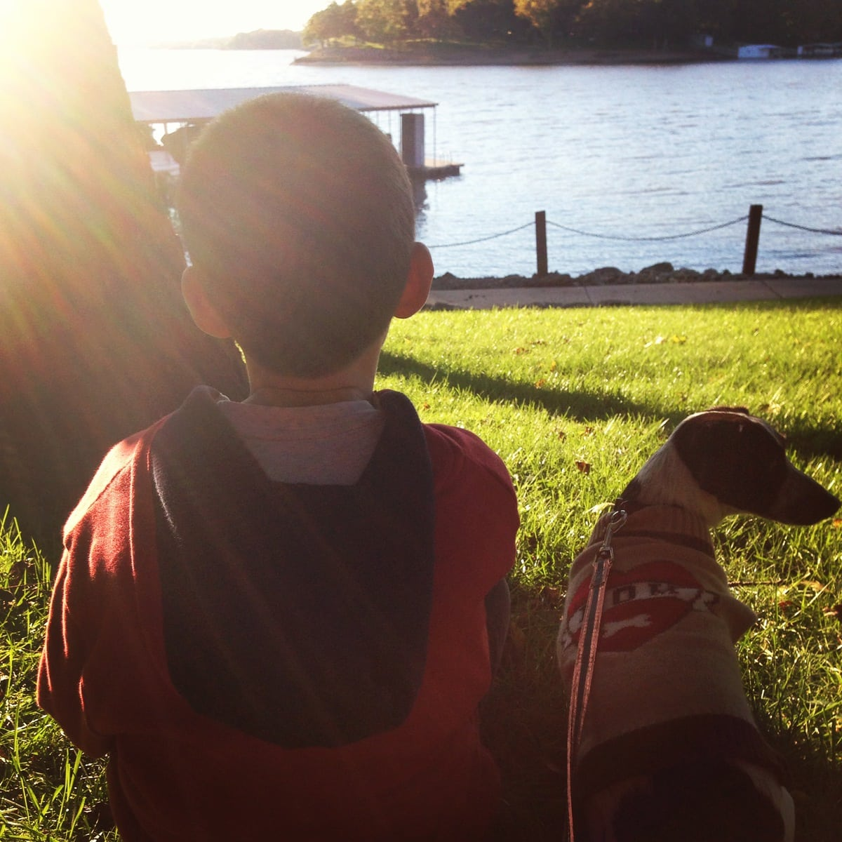 Rescued Dog and Autistic Boy Change Each Other's Lives Forever