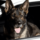 Hero Police K-9 Survives Shooting
