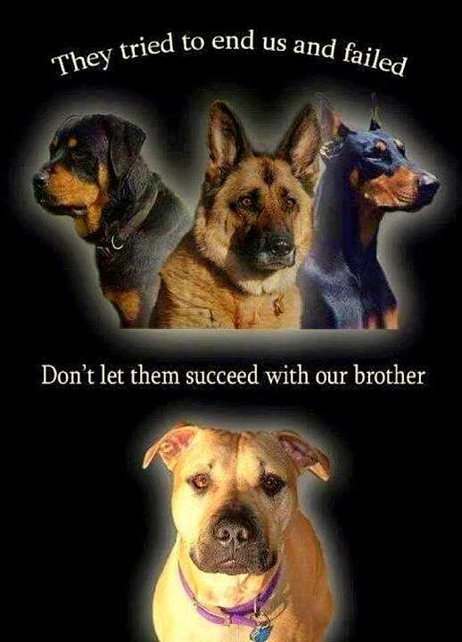 breed ban laws Breed bans: ontario, canada there are no bad dogs, just bad owners think these laws will not affect you because you do not own a dog on the list.
