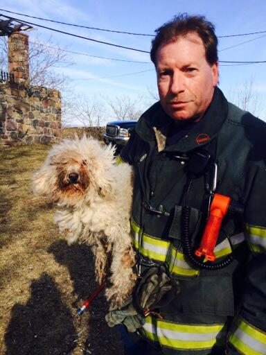 Firefighters Rescue Abandoned Dog from Ravine