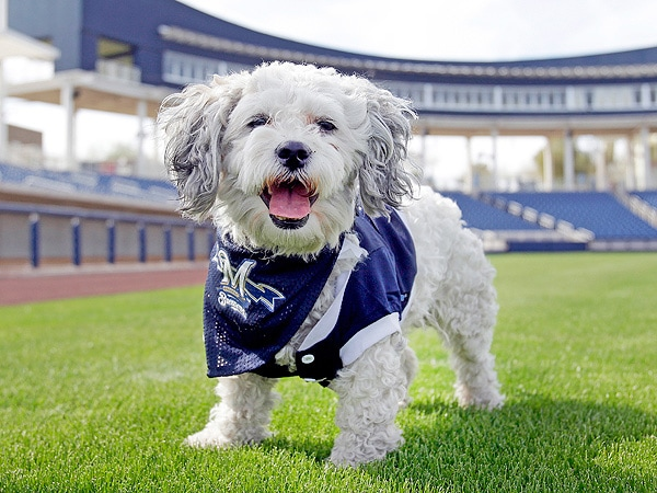 Hank the Dog Greeted by Hundred of Fans in Milwaukee