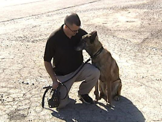 Retired Military Dog Reunited with Former Handler