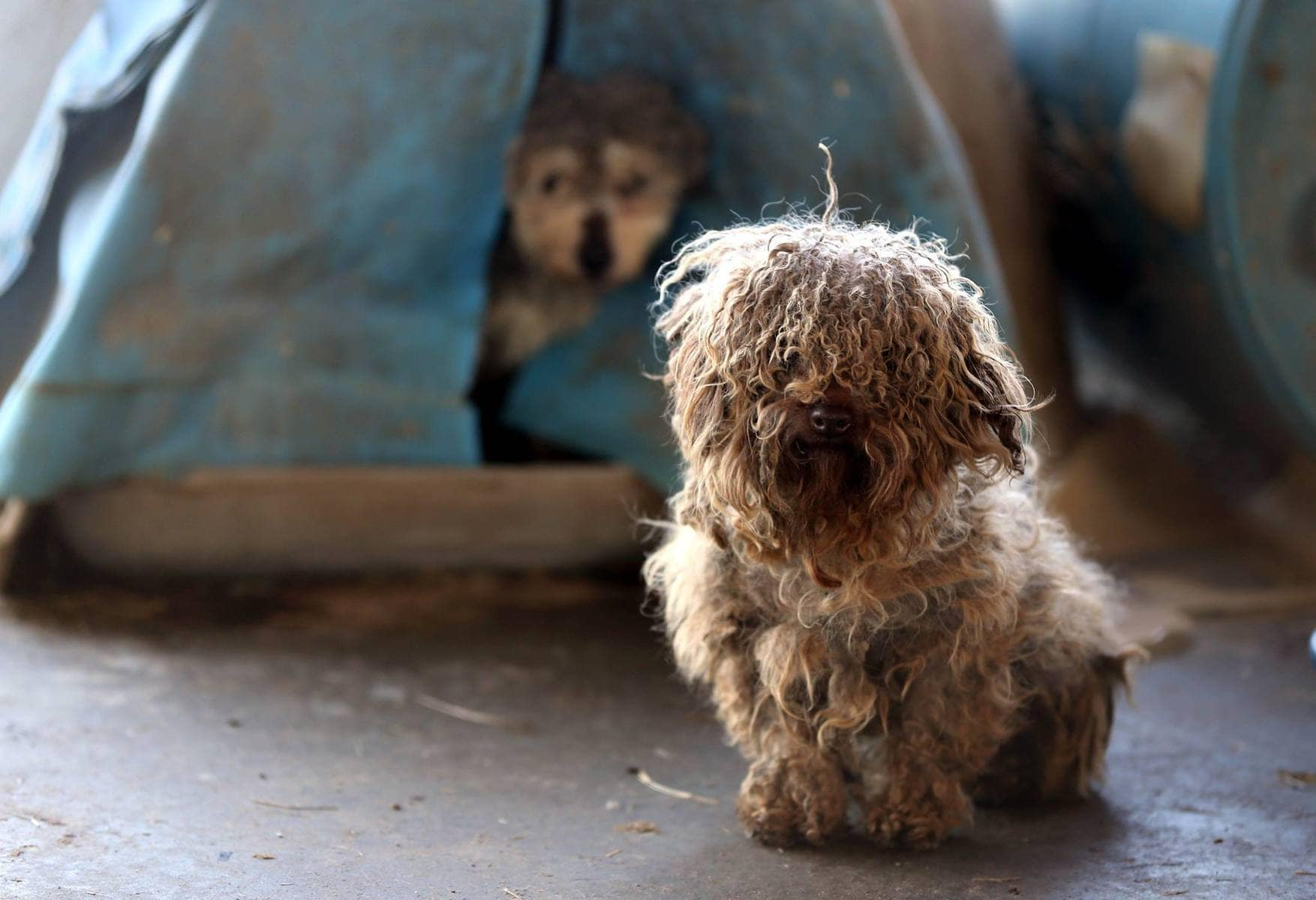 183 Animals Rescued from Puppy Mill in Arkansas