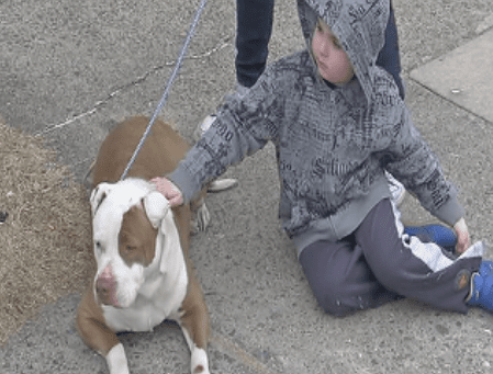 Strangers Come Rescue Dog Tossed from a Car