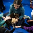 After School Program Empowering Girls Through Animal Rescue