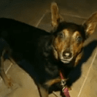 Rescue Dog Saves Owner from Fire