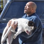 American Bulldog Rescued from Morristown, PA Fire