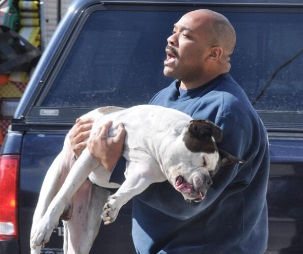Morristown firefighter Dana Lee carrying Darius to safety.  Photo Credit: The Times Herald