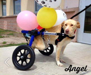 Dog Gets Back on All Paws Thanks to Anonymous Pet Wheelchair Donation