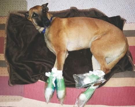 Loose Dog on I-95 Gets Rescued