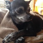 Microchip Reunites Dog Missing for Two Years with Owners