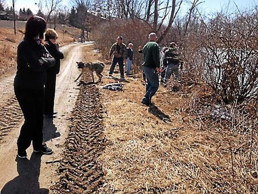 Michigan Community Saves Dog from Lake Drowning