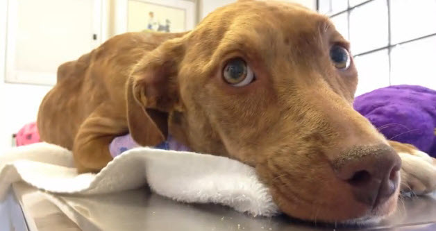 Abused Two-Legged Tijuana Dog Finds Guardian Angels in California