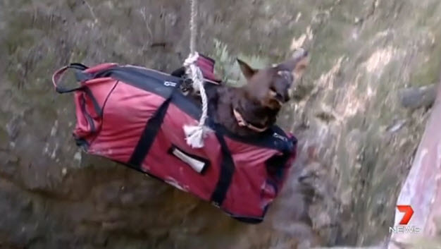 Dog Rescued after Falling 20 meters into Mine Shaft