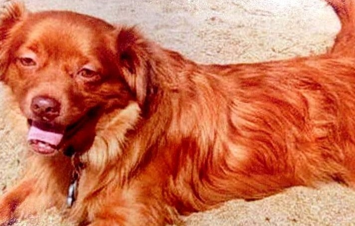 UPDATE:  Stolen Dog Found Dead; Help Find Murderers