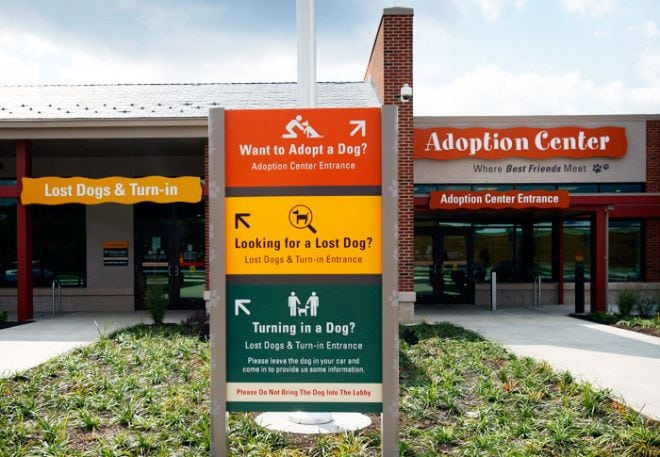 Shelter and Adoption Center's Investigation into Complaints Against Own Doctor