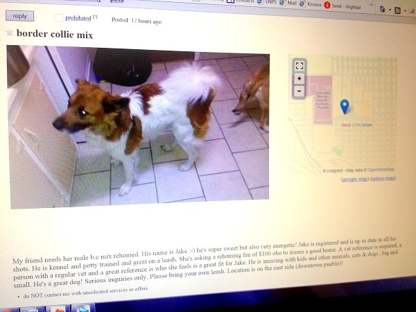 Woman Finds Her Lost Dog for Sale on Craigslist