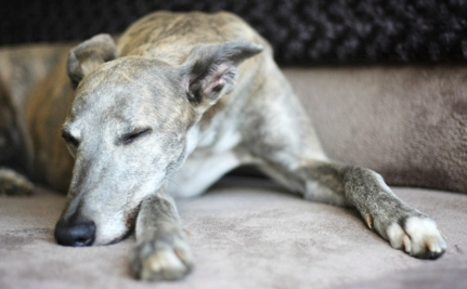 4.16.14 - Greyhound Racing Banned in Co