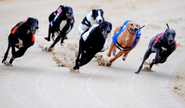 Greyhound Races at Romford