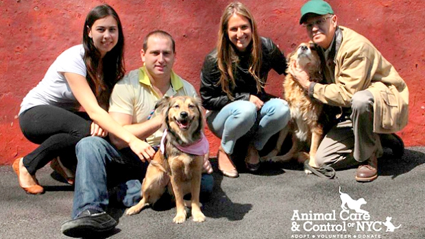UPDATE:  Train-Racing Dog Finds Forever Home