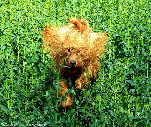 Best Dog Food For Labs >> 17 Dogs Having Really Bad Hair Days - LIFE WITH DOGS