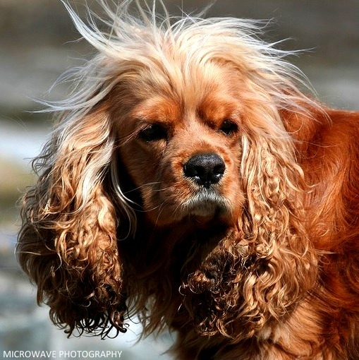 Nutro Ultra Dog Food >> 17 Dogs Having Really Bad Hair Days - LIFE WITH DOGS