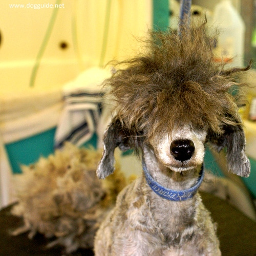 17 Dogs Having Really Bad Hair Days Life With Dogs