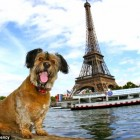France Grants Pets Rights as Living Beings
